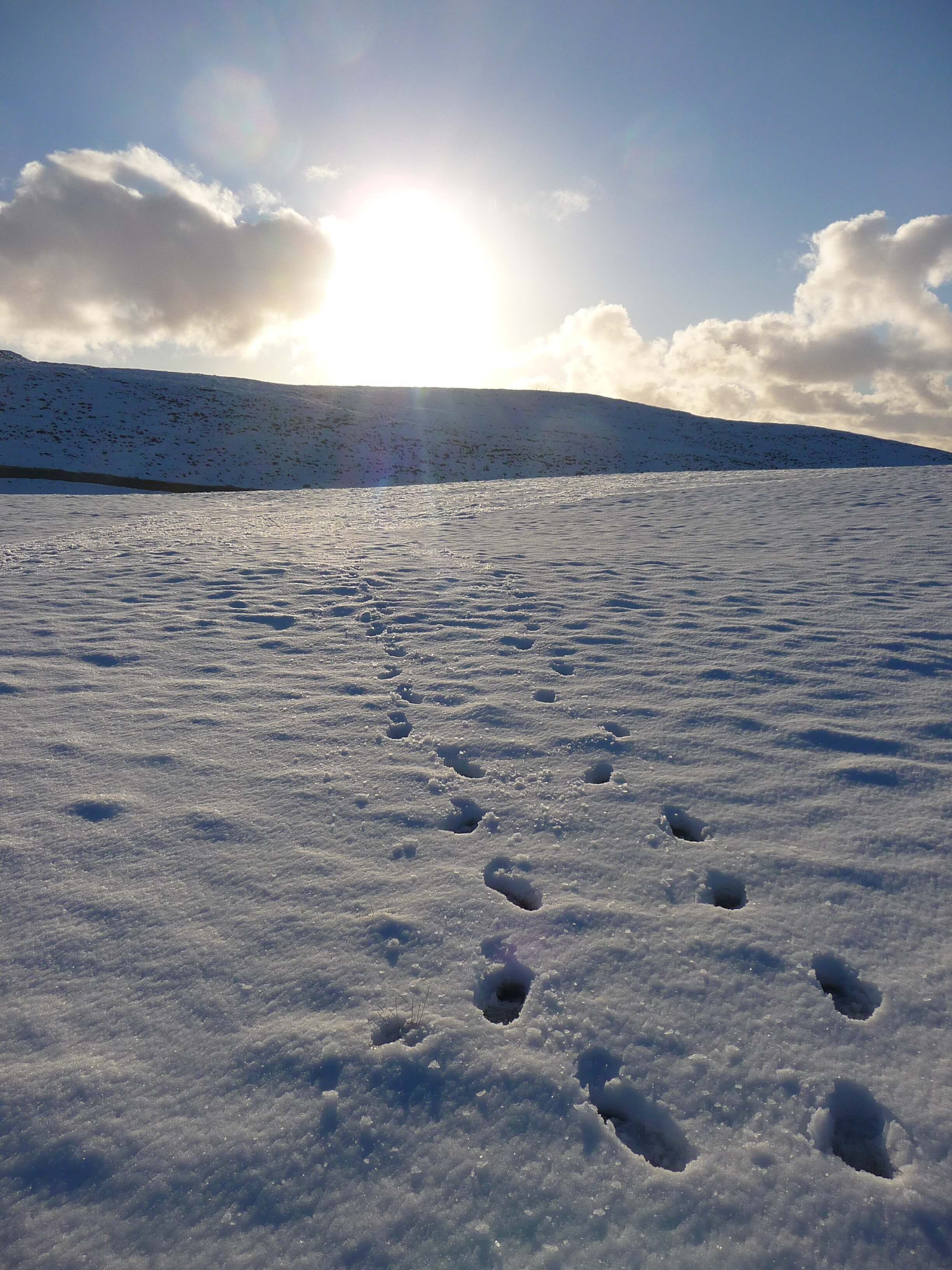 Snowy field near the tower, Firth, Orkney Islands, Scotland