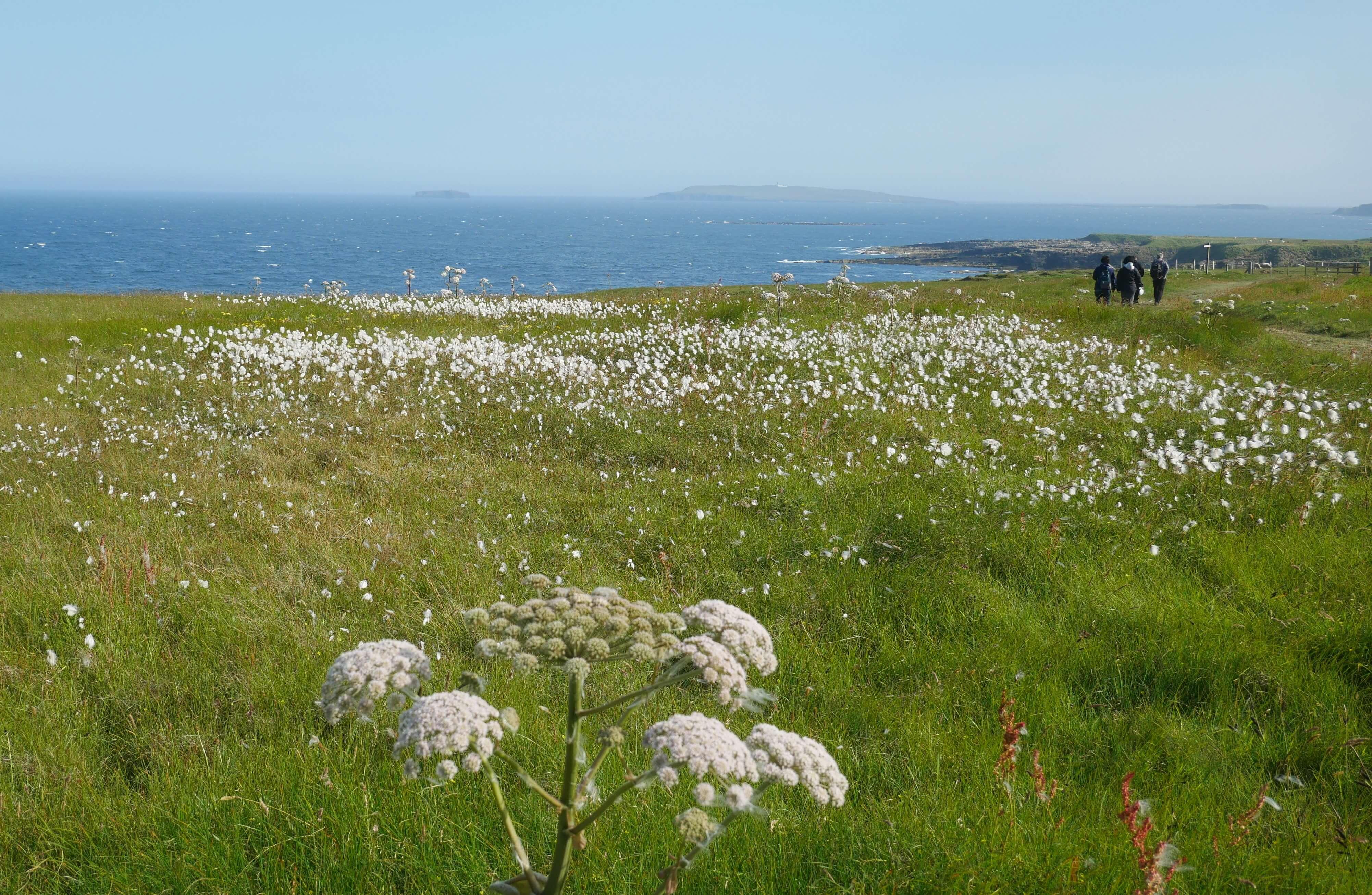 Mull Head walk, Deerness, Orkney Islands Mainland - www.Orkneyology.com