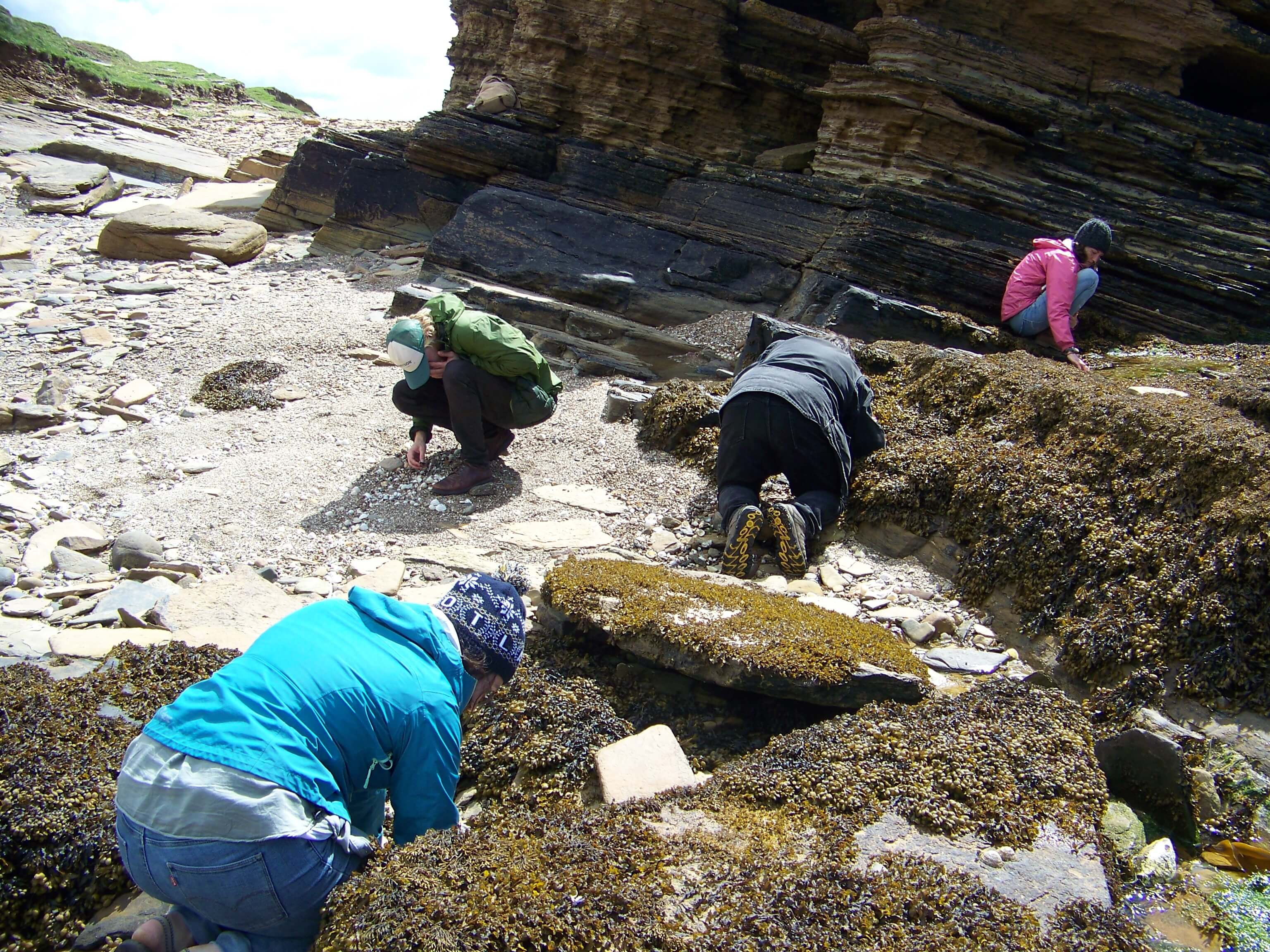 People search for shells on an Orkney beach