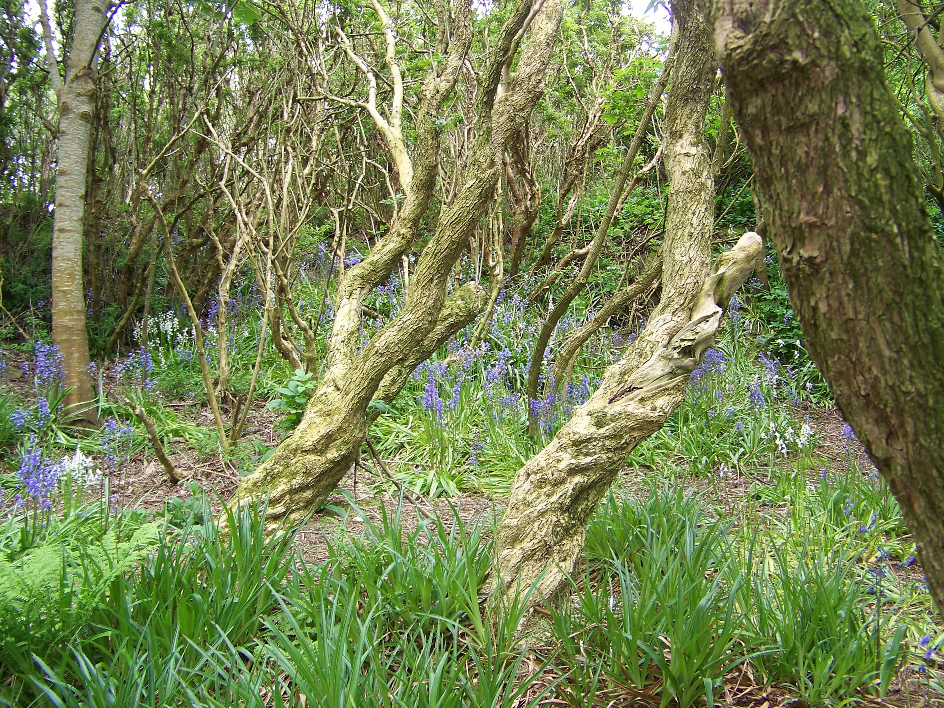 Twisted trees in Happy Valley