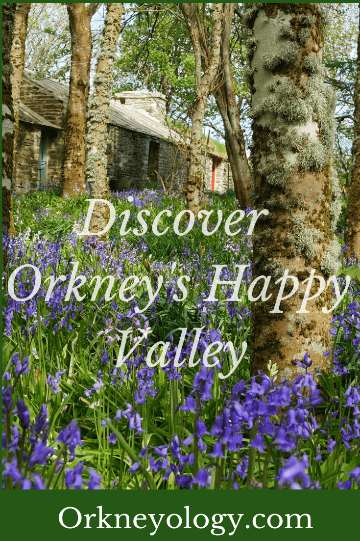 Blubells in bloom in a Scottish Orkney Islands' valley. More about Orkney at www.Orkneyology.com