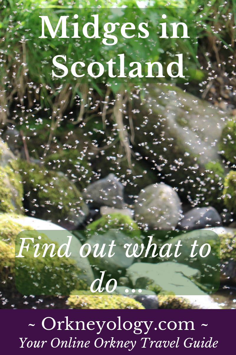 Find out what to do to avoid midgies in Scotland, and are there midges in Orkney? Orkneyology.com-midges.html