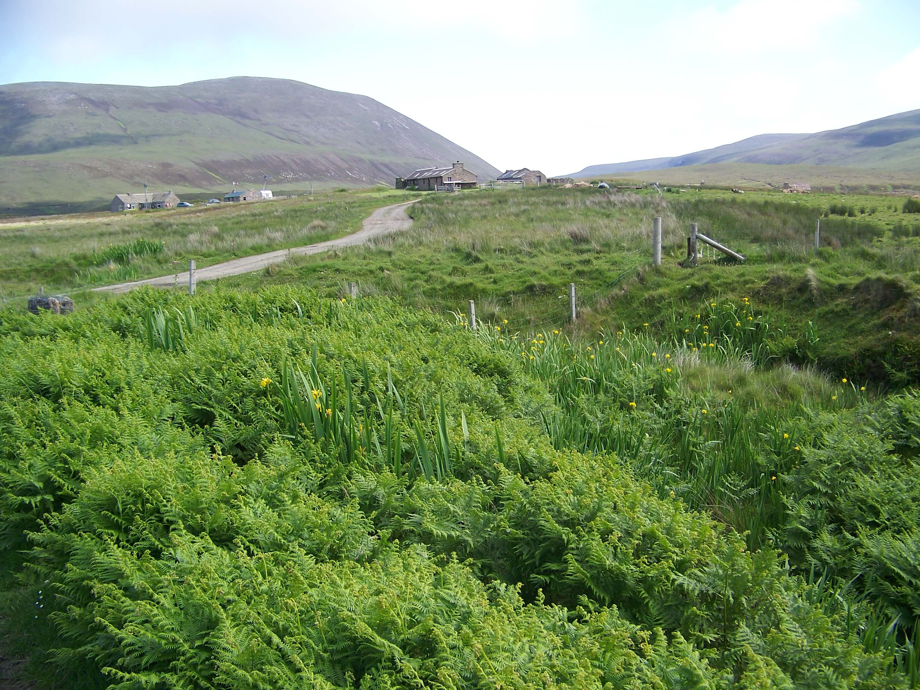 Country road winding though the ferns, Hoy, Orkney